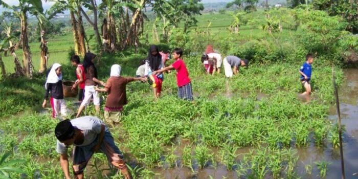 Terapkan Kurikulum Bertani Dan Berkebun